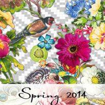 Тканини Indes Fuggerhaus Spring 2014 - фото
