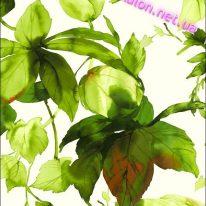 Обои Wallquest Villa Flora VB10300 - фото