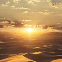 Обои Marburg Dune 32545 - фото