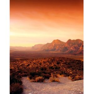 Обои Marburg Dune 32548 - фото